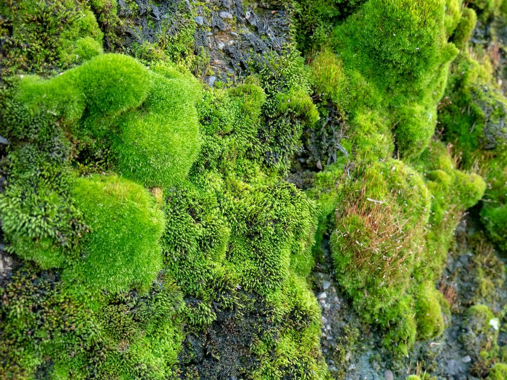 Moss assemblage. Photo by  Joseph Reagle .