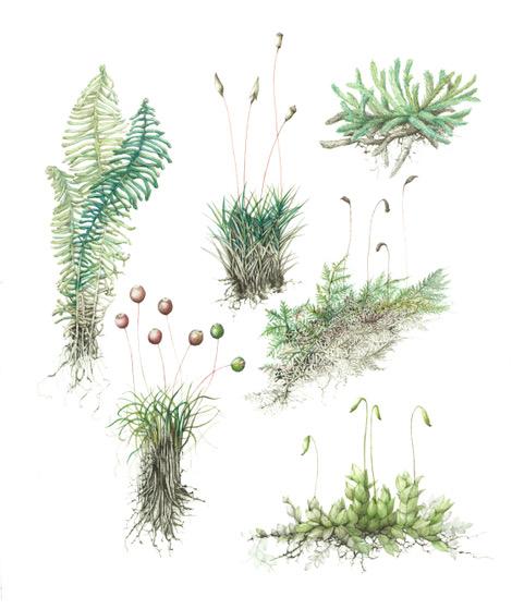 Illustrations by Lara Call Gastinger.