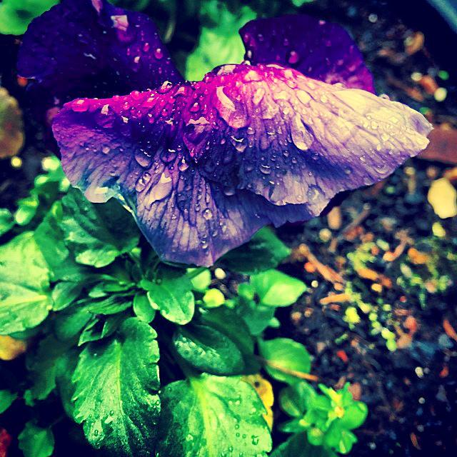 Wet flora of nature, purple flower