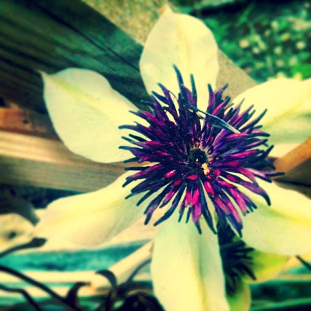 Garden Flora Spotter