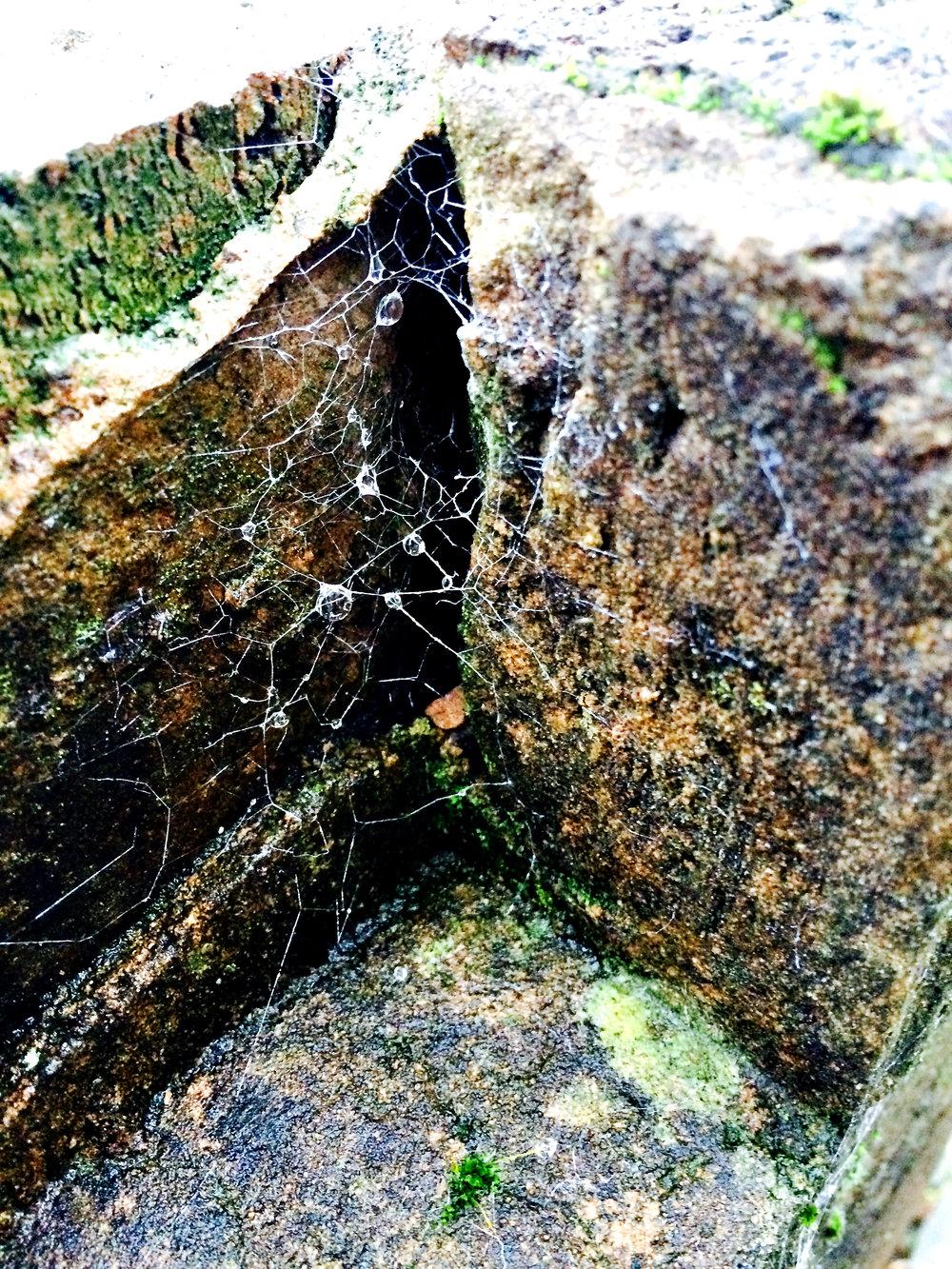 Front Garden Web
