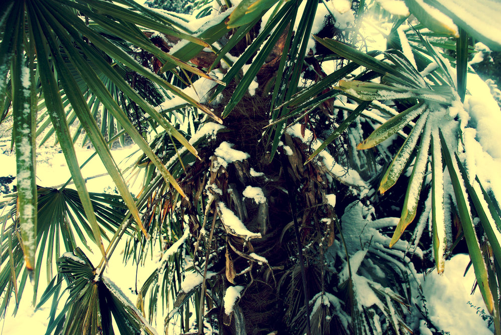 Tropical Winter 2