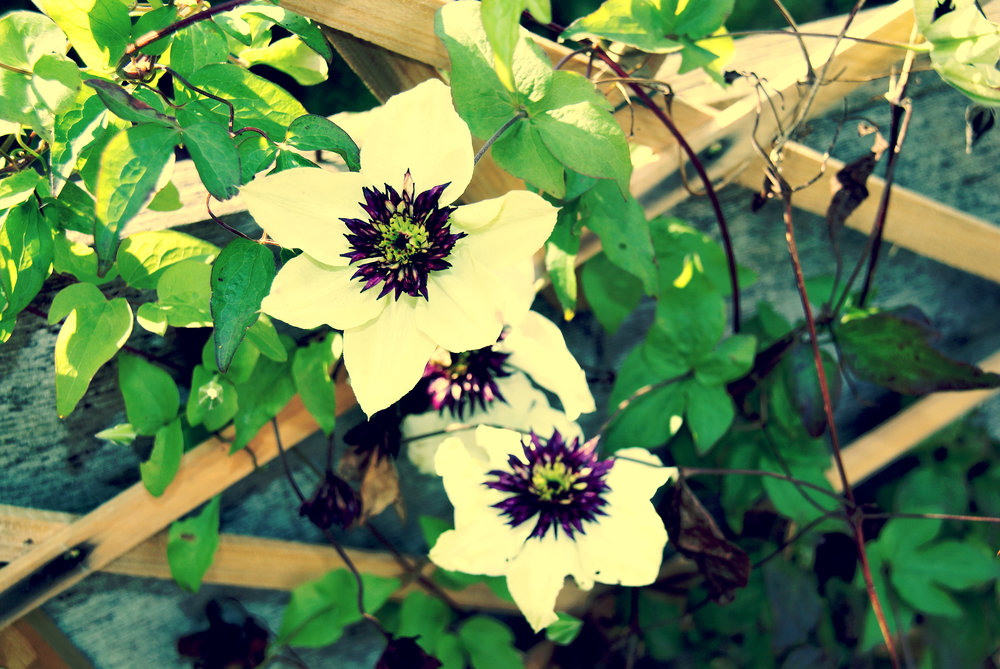 2 white and purple garden flowers.jpg