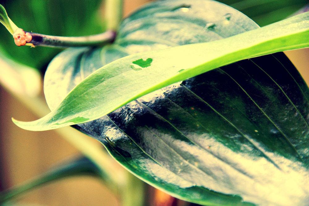 garden leaf 2.jpg
