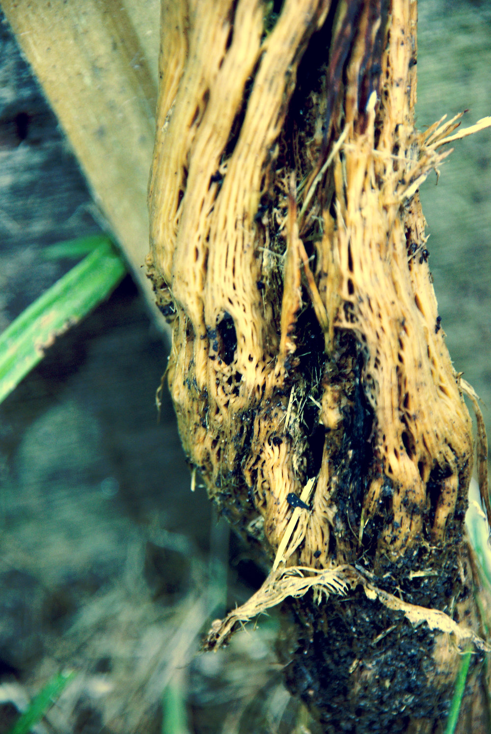 woody stem 2.jpg