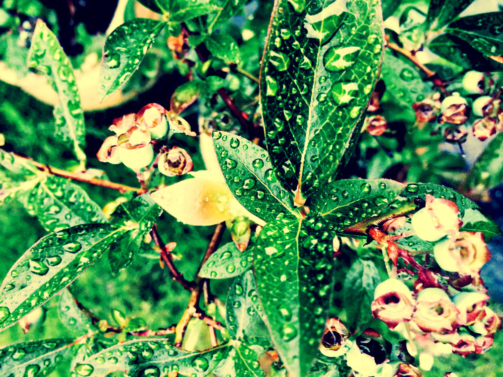 Wet Nature (Colour)