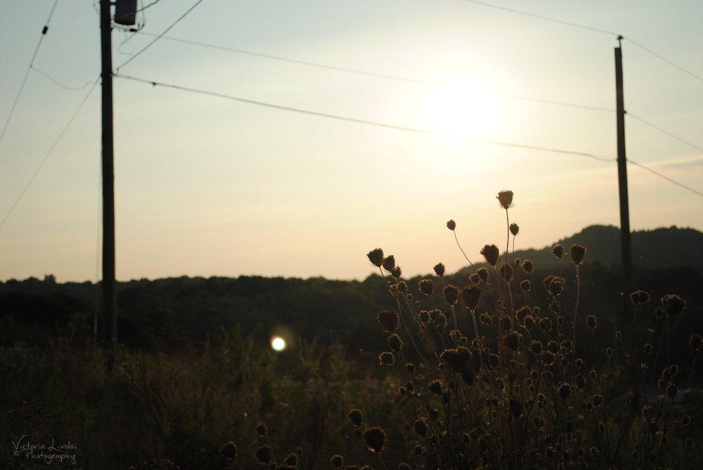 nature1 014wm.jpg