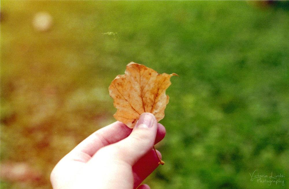 film leafwm.JPG