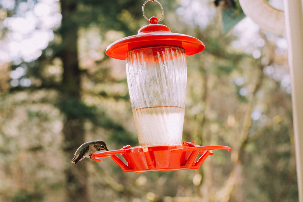 Hummingbirds are the only birds that can fly backwards.