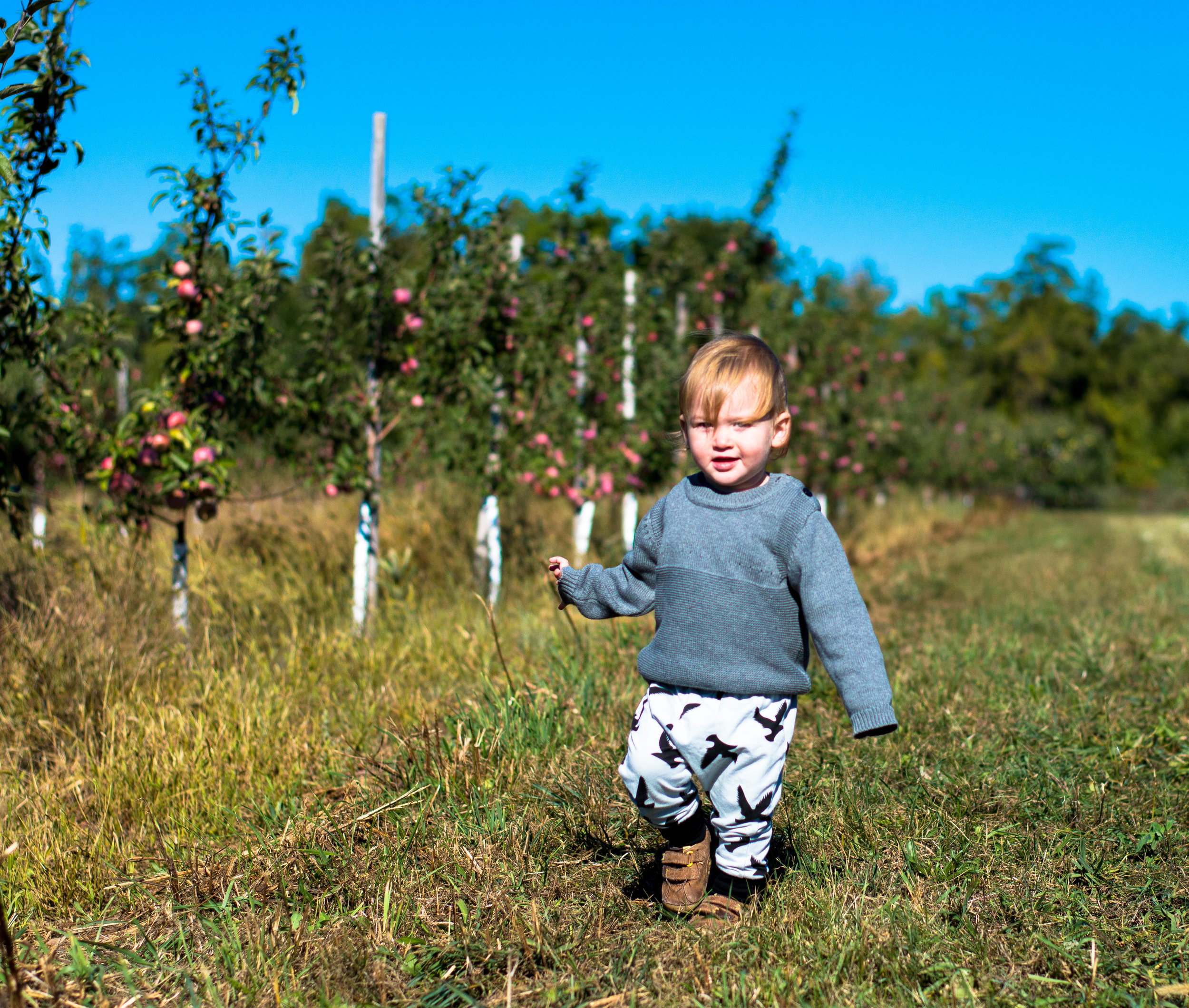 Little green lives -Lets go apple picking