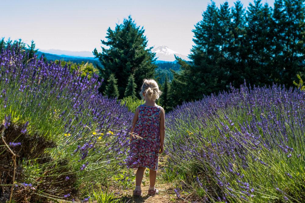 lavender 9 (1 of 1).jpg