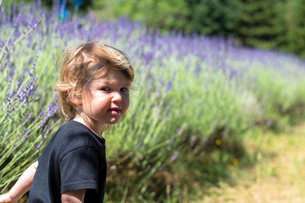 lavender 8 (1 of 1).jpg