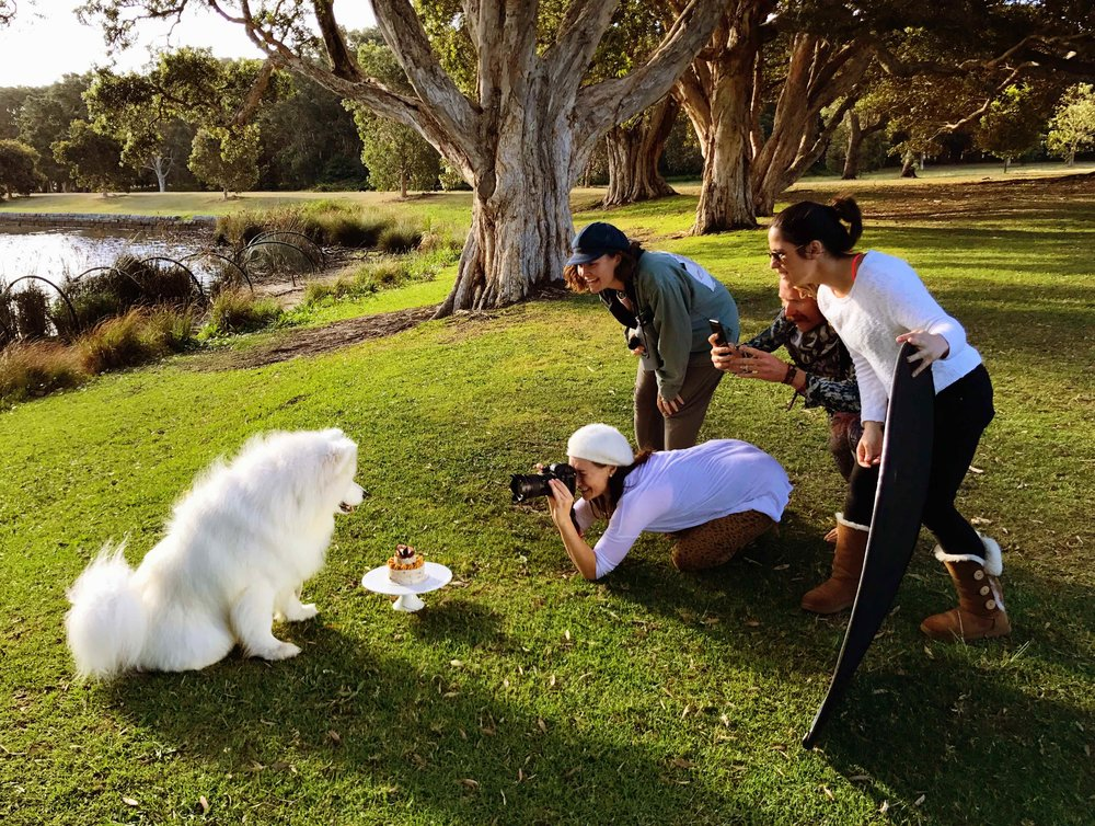 Photographing the Instagram star @Simba.theSamoyed with his Mum and friends