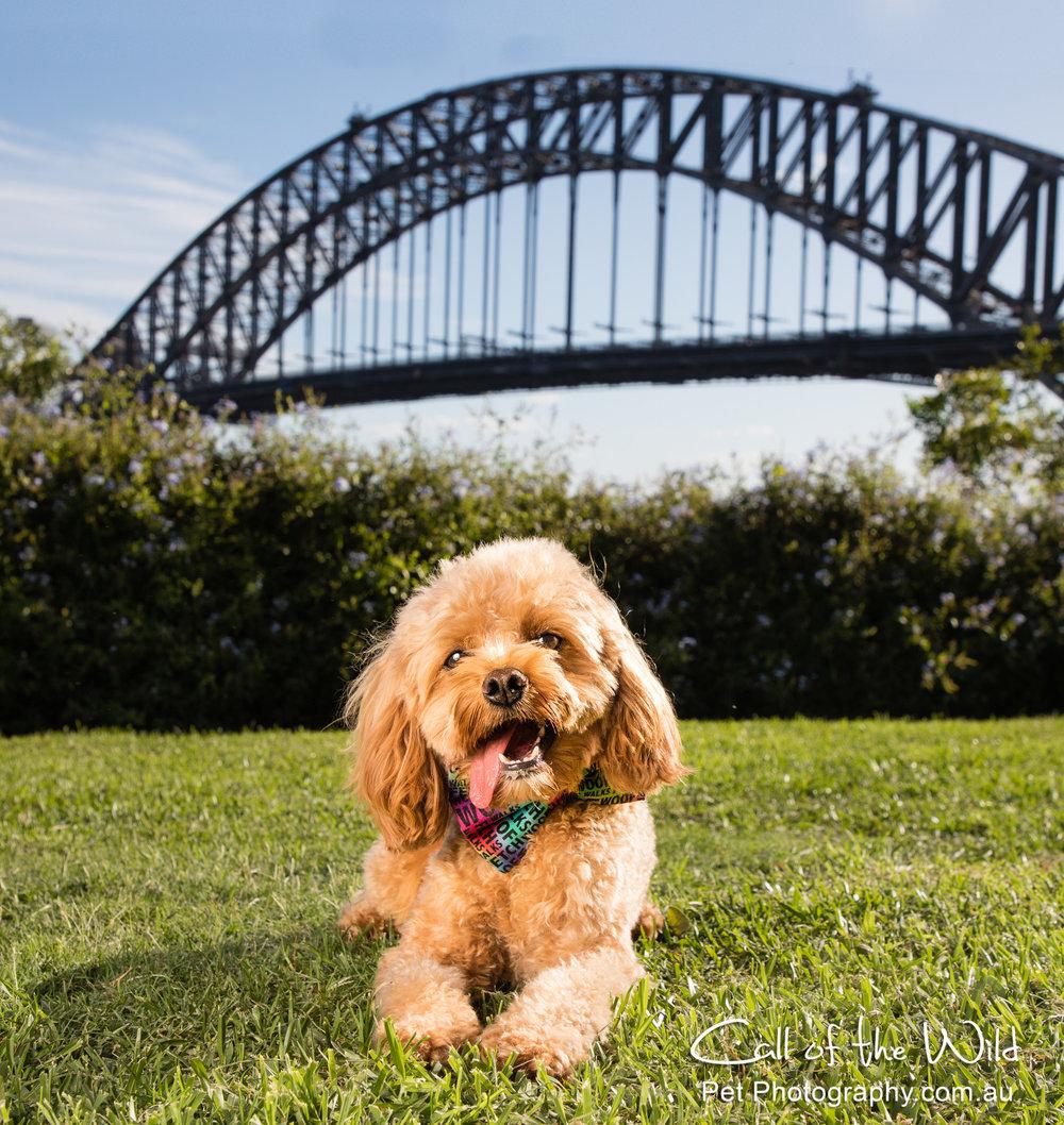 Oscar under Harbour Bridge 2-.jpg