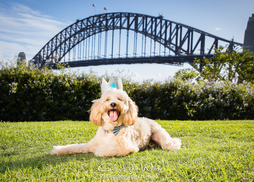 Harvey Bear under Harbour Bridge w bday hat-120.jpg