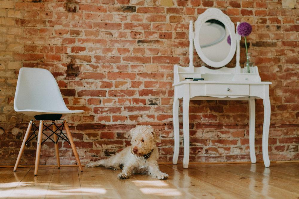 Im Fotostudio in Berlin sorgt unser Hund für Wohlfatmosphäre