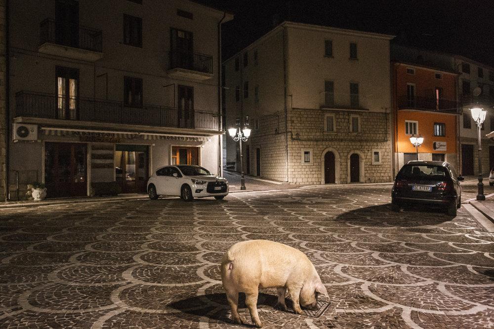 """""""Il porco di sant'Antonio"""", a Pescopennataro (IS), in Molise. Foto scattata durante la prima edizione del workshop a Gennaio 2018 © Giuseppe Nucci."""
