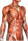 Strong abdominal muscles stabilize and support your low back.