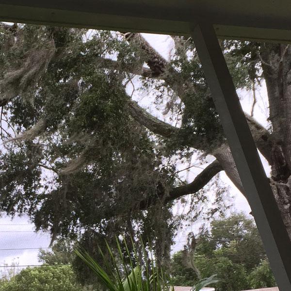 storm-trees.jpg