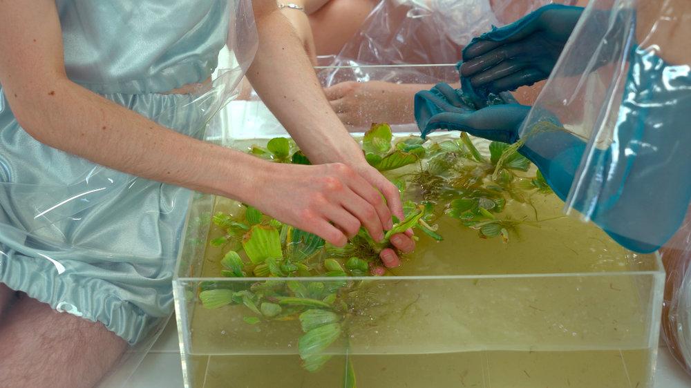 'Water Lettuce' - Photo by:  Ben Wells  &  Adam Wells   Performers:  Ben Wells,  Warudom Sombatkamra & Charlotte Oppenheim