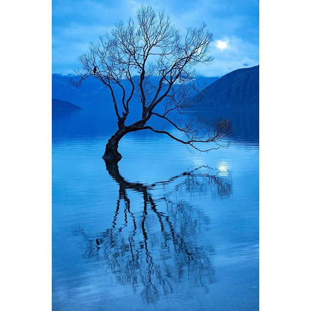 ⠀⠀⠀⠀⠀⠀⠀⠀⠀ ⠀⠀⠀⠀⠀⠀⠀⠀⠀ This crack willow in Lake Wanaka is probably the most photographed tree in New Zealand. Ironically, crack willow is an invasive species in New Zealand, originating in Europe. ⠀⠀⠀⠀⠀⠀⠀⠀⠀ ⠀⠀⠀⠀⠀⠀⠀⠀⠀ #lakewanaka #lakewanakatree #newzealand #tree #nature #lake #willow #blue #reflection #wanakatree #naturephotography