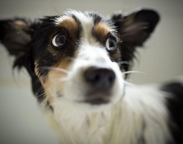 Tippi, Bath #dog