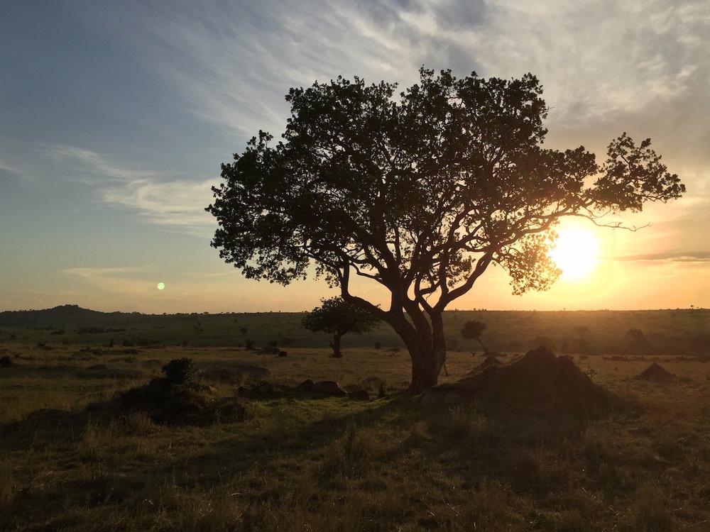 Africa-iPhone-6.jpg