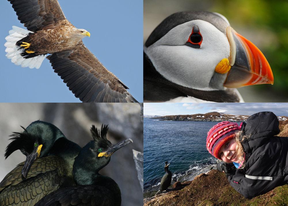 Hornøya fuglefjell utenfor Vardø er en av Europas heftigste naturattraksjoner.