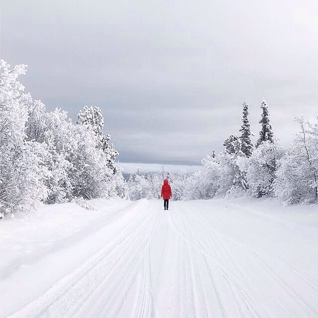 Winter Time 👣(📷@travelyukon) #weareyourcity  _ Join Our Worldwide Luxury 24hr Concierge. Exclusive VIP Benefits with Luxury Brands. Choose Monthly or Yearly Membership. _  Our Services Include:  Dining, Shopping, Travel, Hotels, Leisure, Entertainment, Events, Home, Cars, Health, Beauty, Spas, Special Occasions & Bespoke Requests. _  Membership Enquiries & Collaborations:  info@weareyourcity.com  www.weareyourcity.com _  #concierge #conciergeservices #conciergeservice #conciergelife #conciergerie #luxurylife #luxurytravel #luxurybrand #luxurylifestyle #luxuryliving #luxurystyle #luxury #exploreyukon #views #beautiful #wanderlust  #winter #igdaily #vip #beautifuldestinations #snow #snowday #travel #winterwonderland #explore #travelphotography #travelblogger #travels
