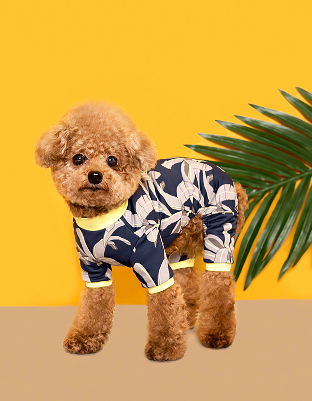 Megan Isabella x Huts & Bay collaboration: Dog Swimsuit