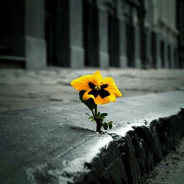 flower concrete.jpg