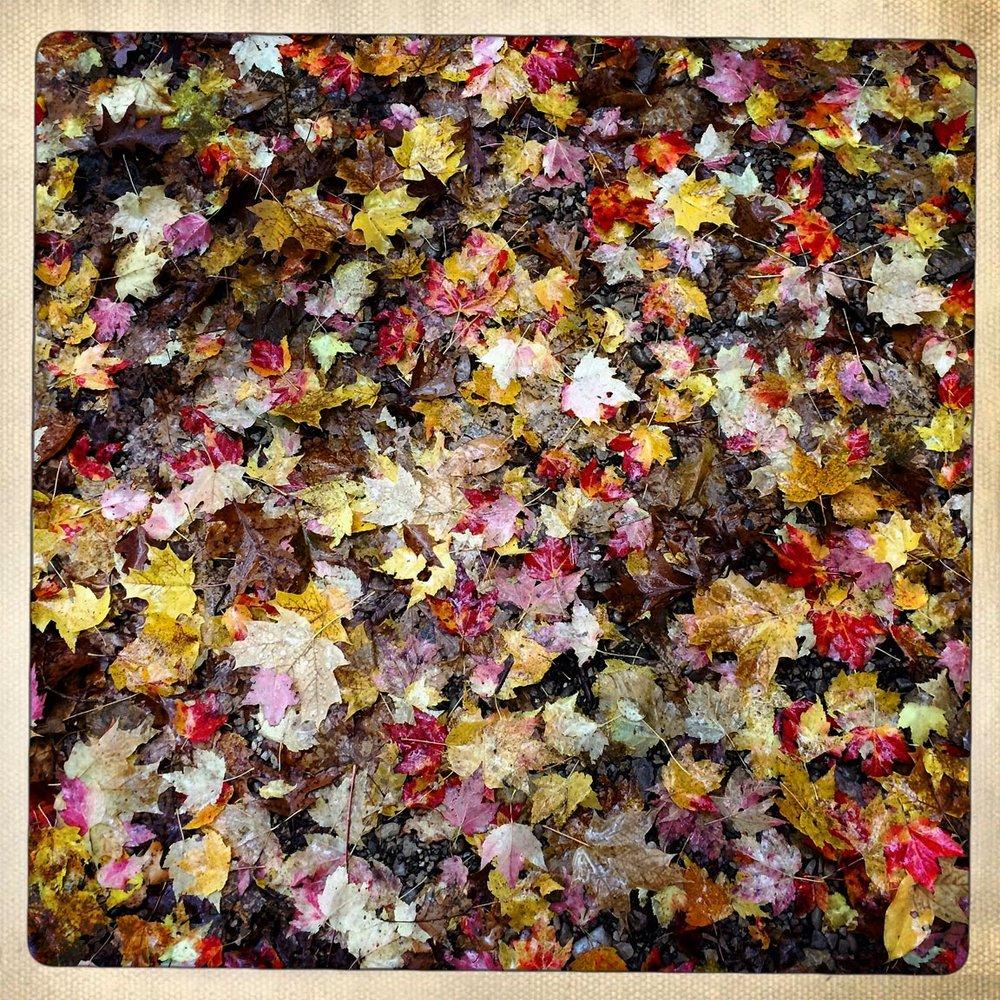 Leaves1_2017-11-7