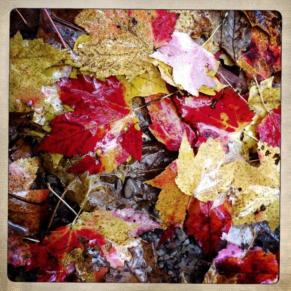 Leaves2_2017-11-7