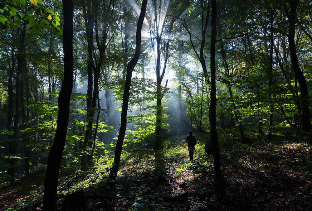 forests of Samobor -