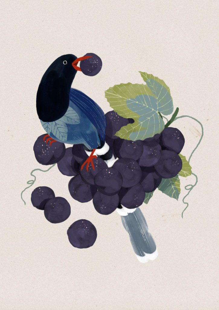 grapes_0-725x1024.jpg
