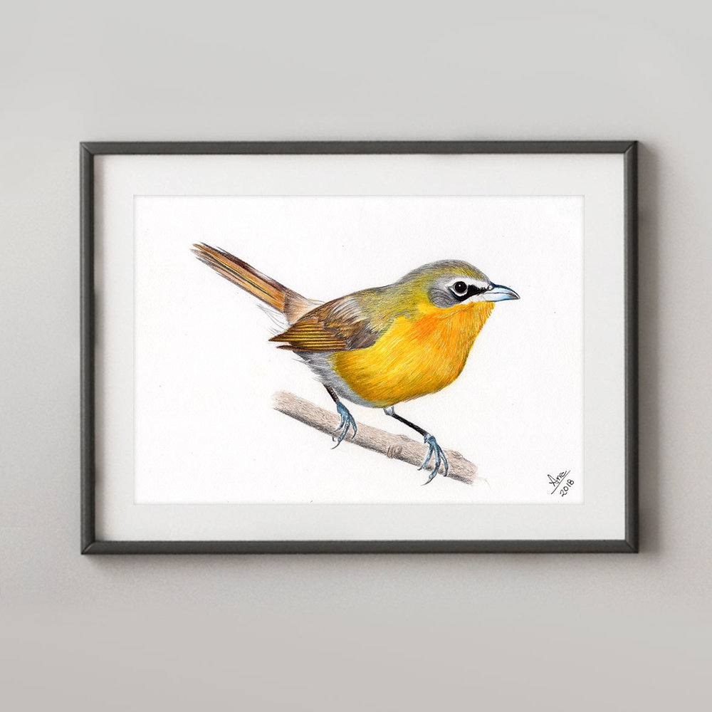 AJ-Yellow-breasted_Chat.jpg