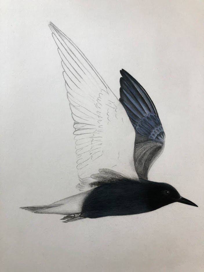 Bird illustration by Natalia Rojas