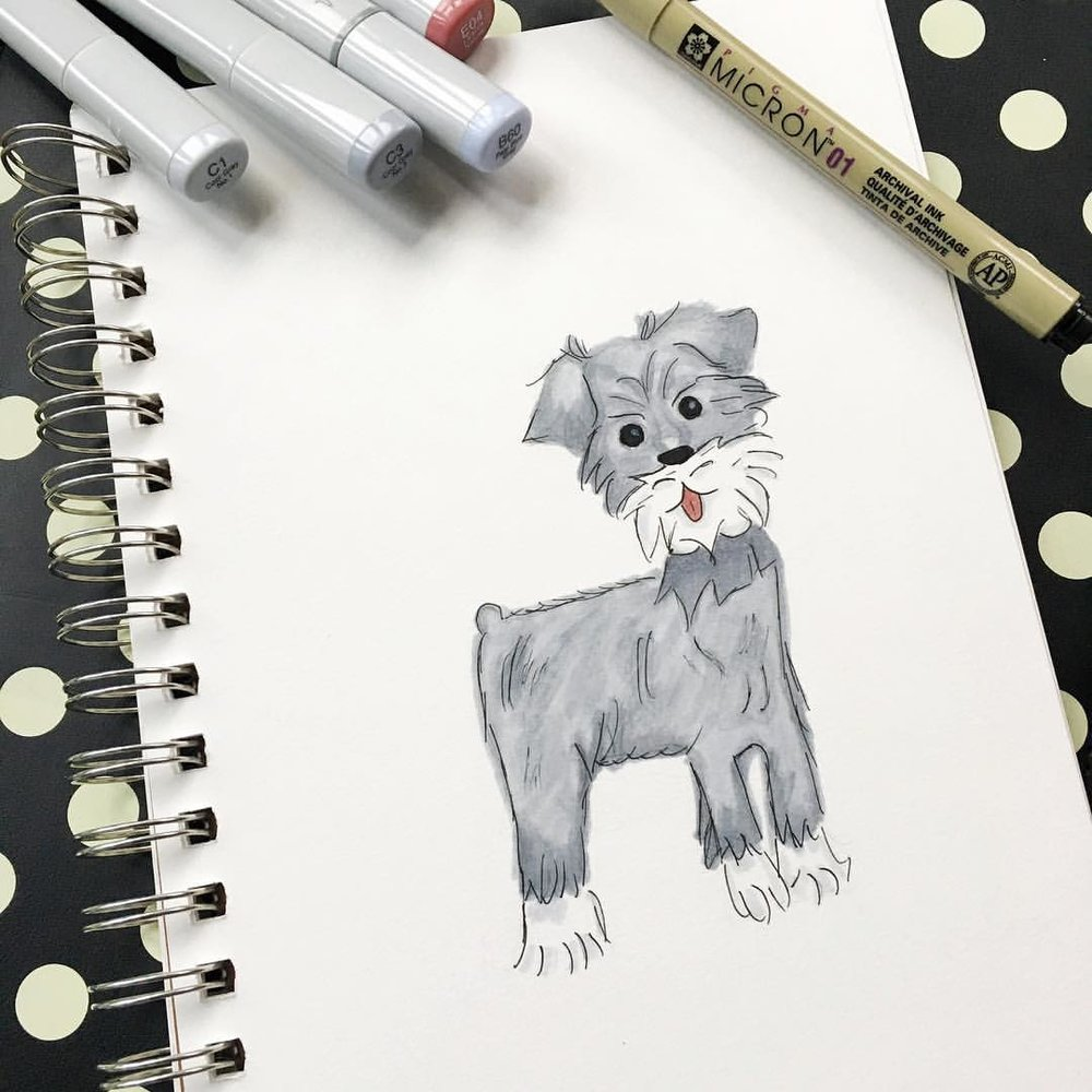 How cute is this mini schnauzer? @pizzawilson I'll attempt to draw you next! 😘  .  .  .  .  #denimandinkdesign #copicmarkers #illustration #minischnauzer #sketch #flashesofdelight