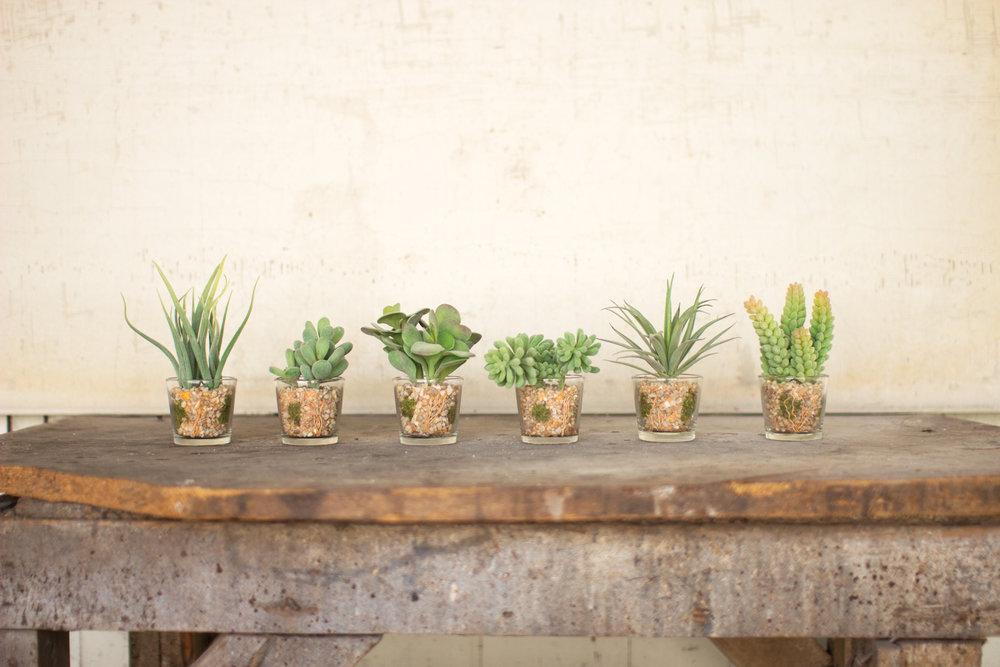 succulentsGarden.jpg