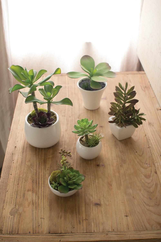 succulentswhiteceramic.jpg
