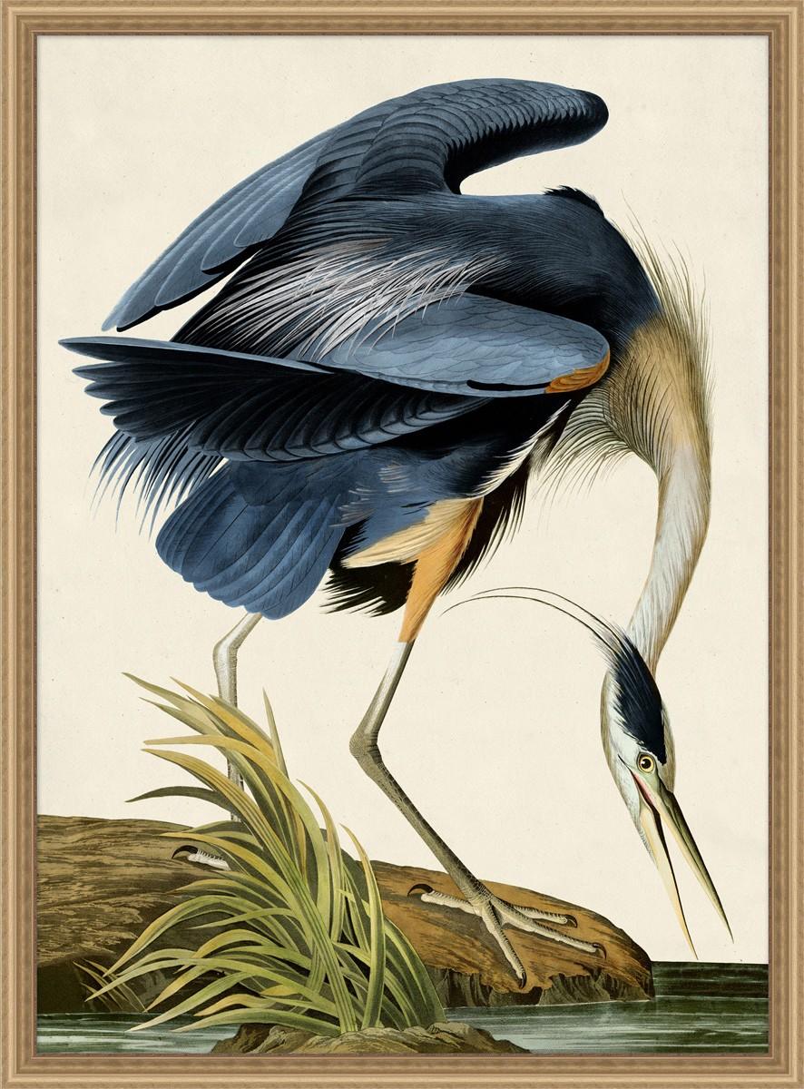 OiseauBird.jpg
