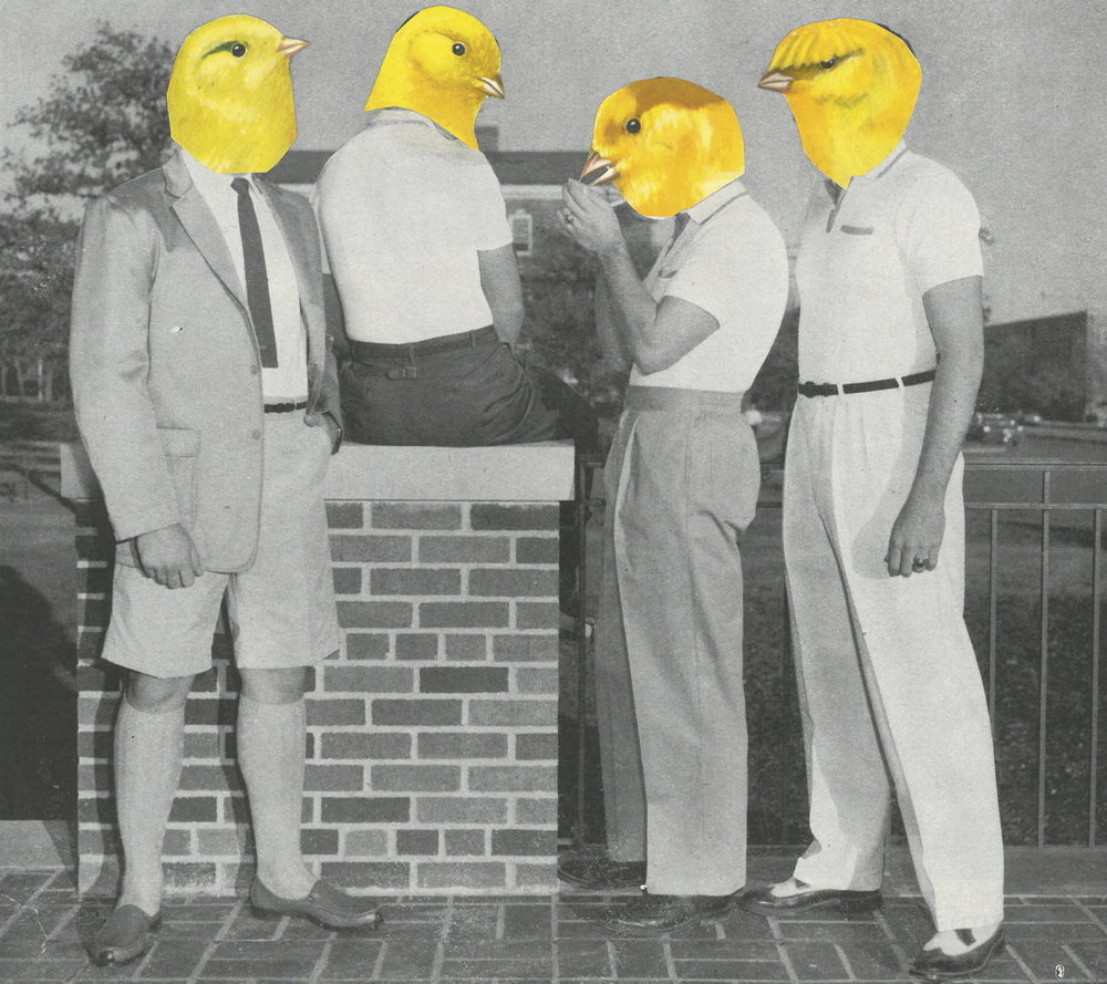Copy of CANARY CASUALS