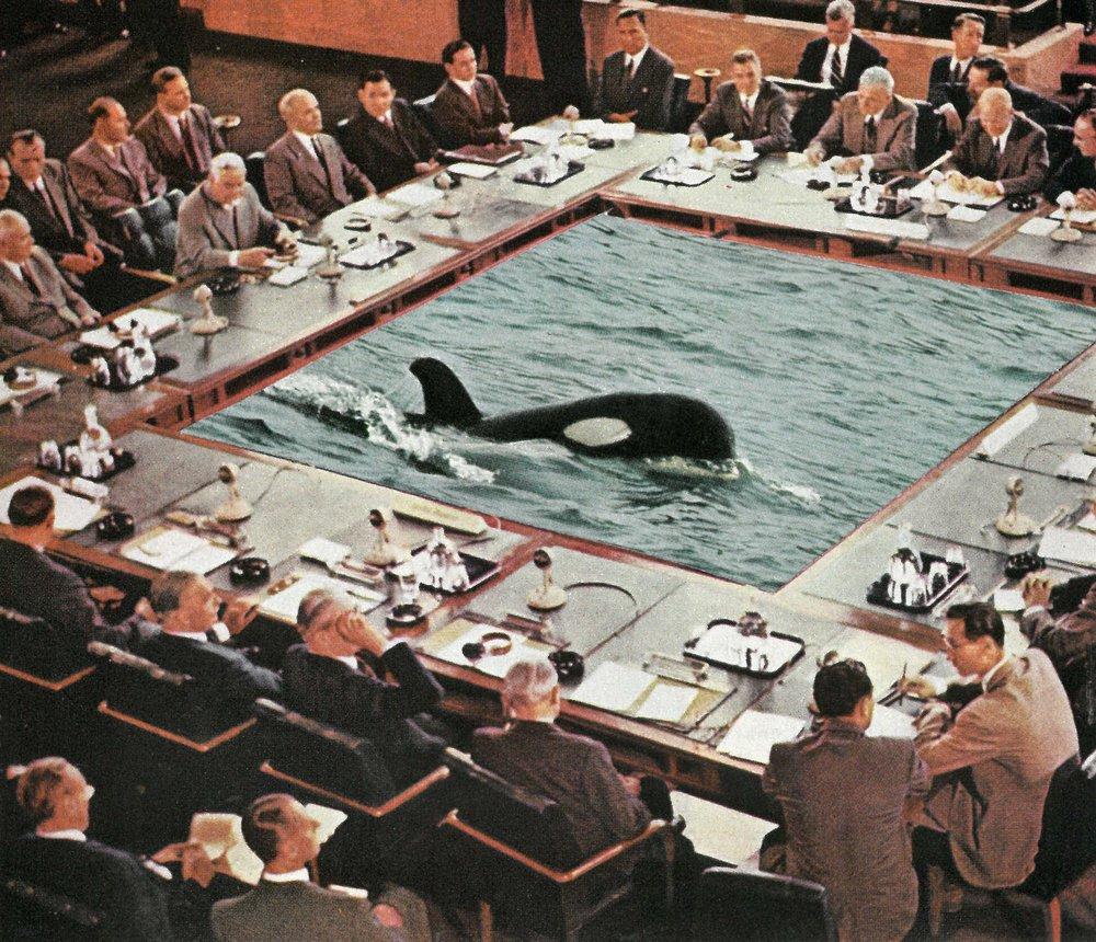 SEAWORLD'S ANNUAL MEETING
