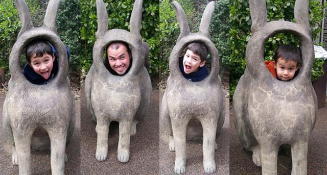 Central Park Rabbits