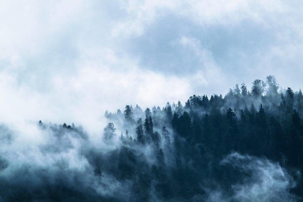 fog-forest-mountain-world-clouds-158672.jpeg