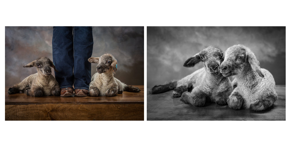 Madison&Lambs_FINAL.jpg