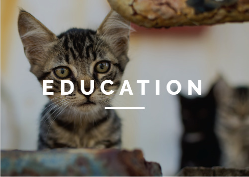 As a part of our mission, we work to educate our community about pet care, pet overpopulation and the humane treatment of animals. Through pet-friendly lessons and curriculum, our staff teaches thousands of children and adults every year.