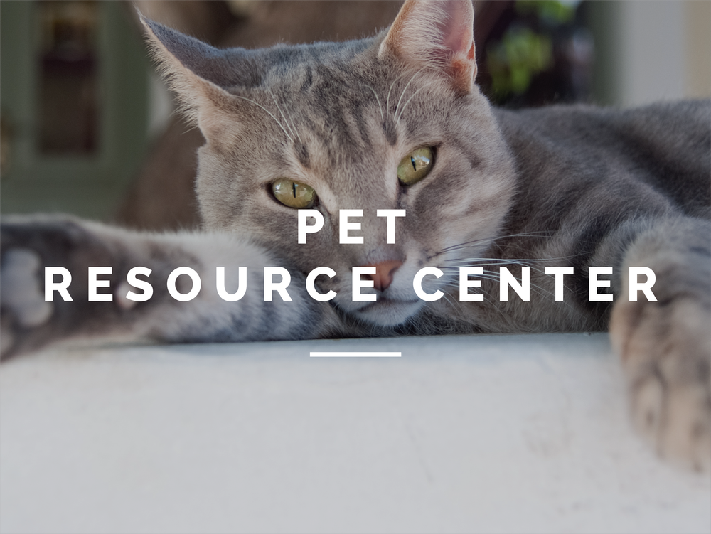 The GBHS accepts any owned animal that is in need of a new home through our pet surrendering program. Regardless of the reason, you and your pet will be treated with compassion and respect.