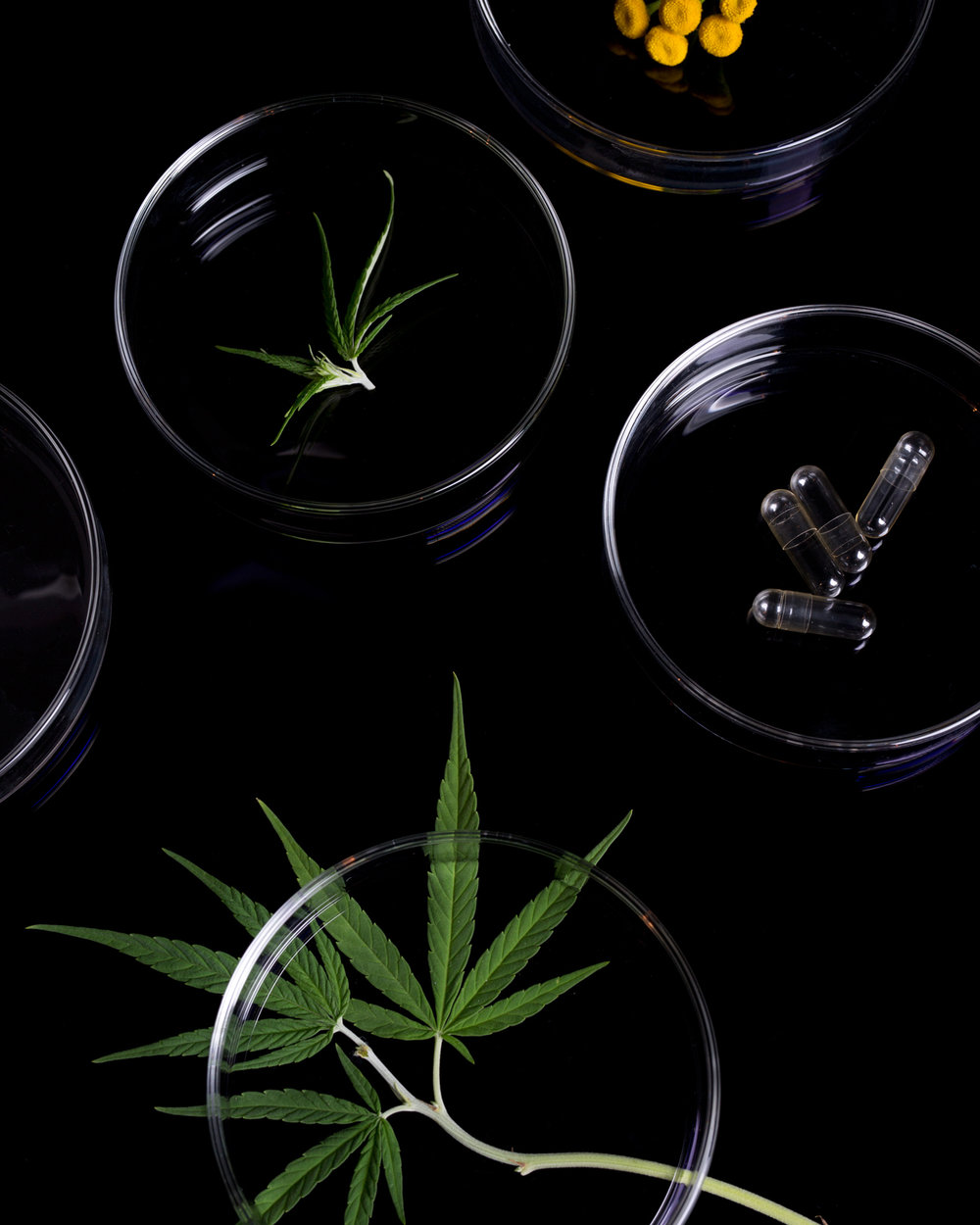 Hail Mary — Cannabis-based alternatives to medicine. Carolyn Gregoire interviews Mary's Nutritionals CEO Lynn Honderd.