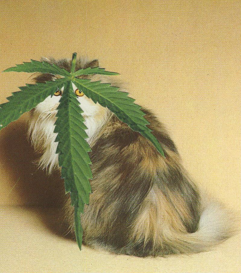 WeedCats4.jpg